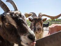 Van der Valk Resort Linstow, Landhaus Typ A in Linstow - kleines Detailbild