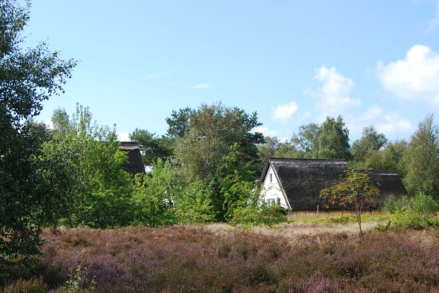Eingebettet in die Heidelandschaft auf Hiddensee