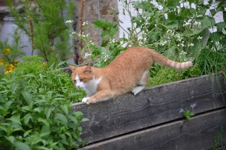 Unsere Katze Mauzi