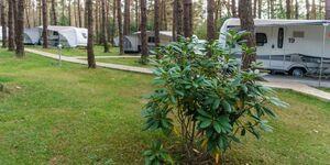 Urlaub im Wohnwagen - mitten im Wald, Wohnwagen 07 in Lütow - Usedom - kleines Detailbild