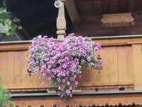 Gästehaus Schiffmann, Ferienwohnung Wallberg in Tegernsee - kleines Detailbild