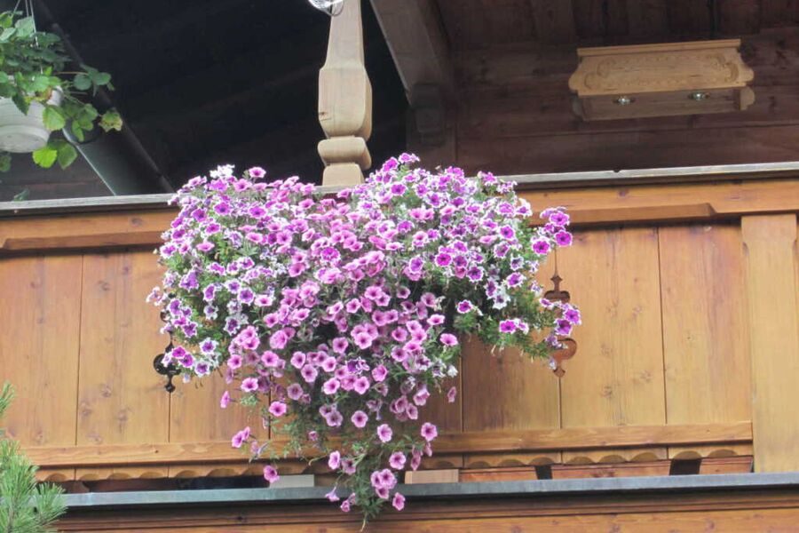 Gästehaus mit Garten