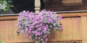 Gästehaus Schiffmann, Ferienwohnung Leeberg in Tegernsee - kleines Detailbild