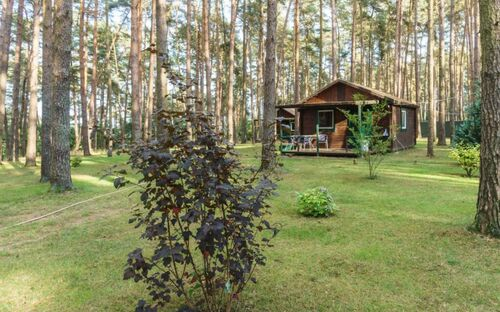 Urlaub im Bungalow - mitten im Wald, Bungalow Nr. 18