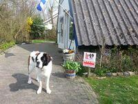 Ferienhaus 'Bungalowpark Het Kustlicht' in Zoutelande - kleines Detailbild