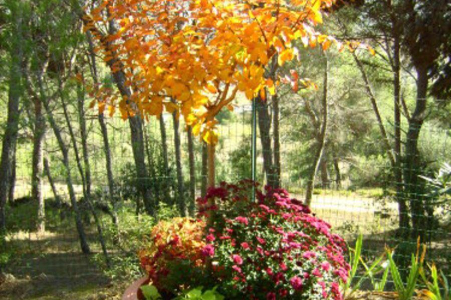 Herbststimmung in Belvèze