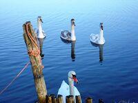 FeWo im Ostseebad - inkl. Boot - nur 50m zum Wasser, FeWo am Wasser in Breege - Juliusruh auf Rügen - kleines Detailbild