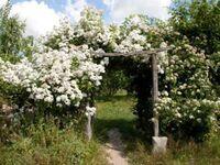 Urlaub auf dem Biohof, Ferienwohnung grün in Schwerin - kleines Detailbild