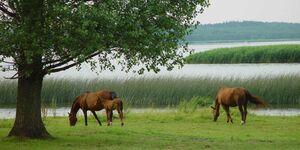 Urlaub auf dem Bauernhof, Fewo 7 in Usedom - kleines Detailbild
