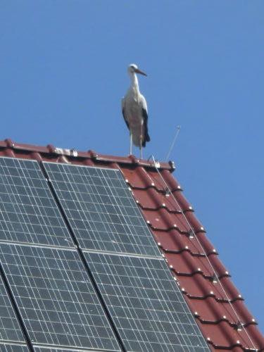 täglicher Besuch auf unserem Dach