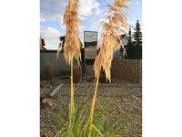 Seewind- Apartments, Apartment 01 in Karlshagen - kleines Detailbild