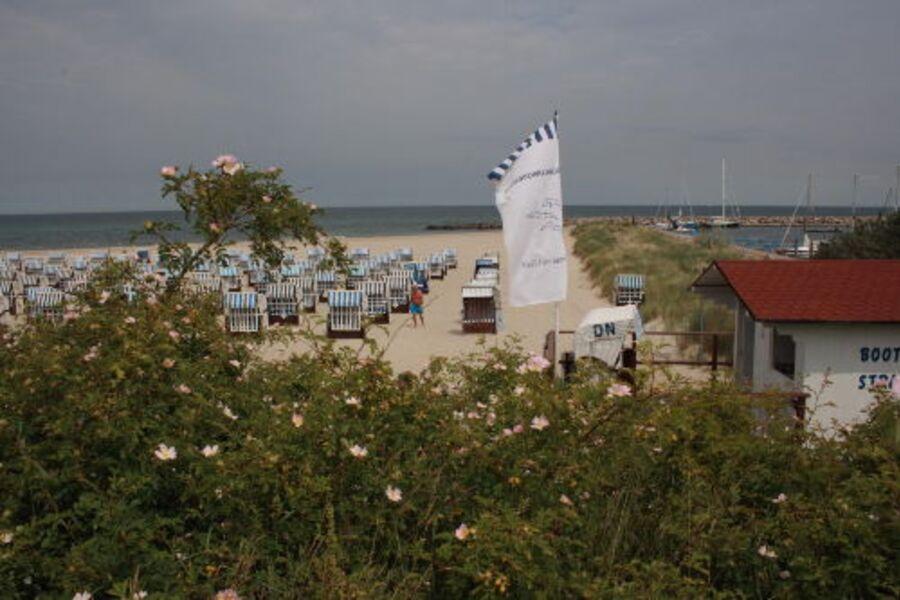 Hier steht der Strandkorb