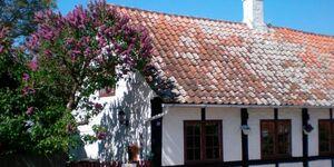 Ferienhaus in Svaneke, Haus Nr. 41343 in Svaneke - kleines Detailbild