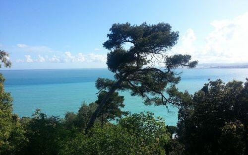 Les Cypres vue mer