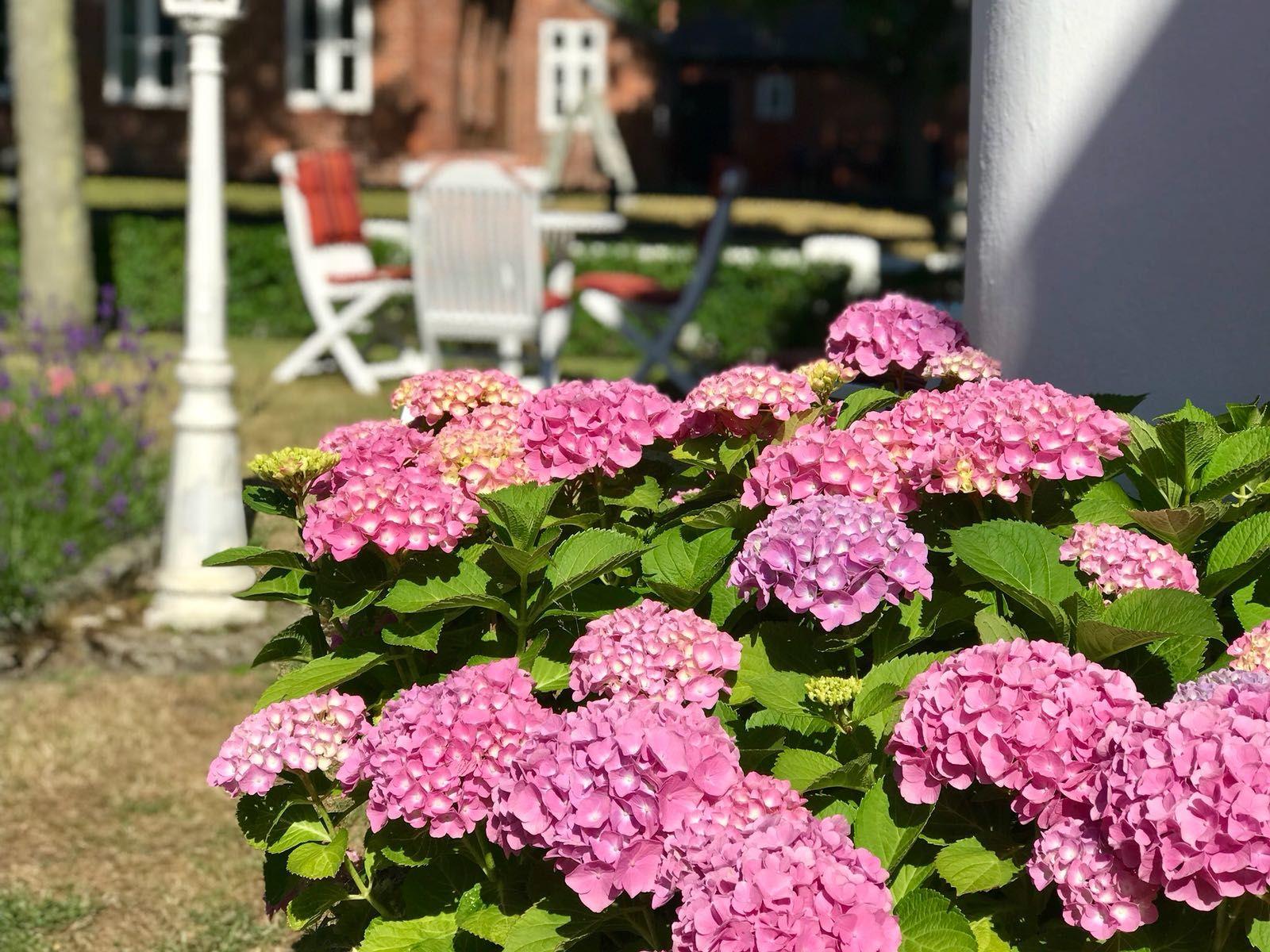 Auch im Vorgarten schön