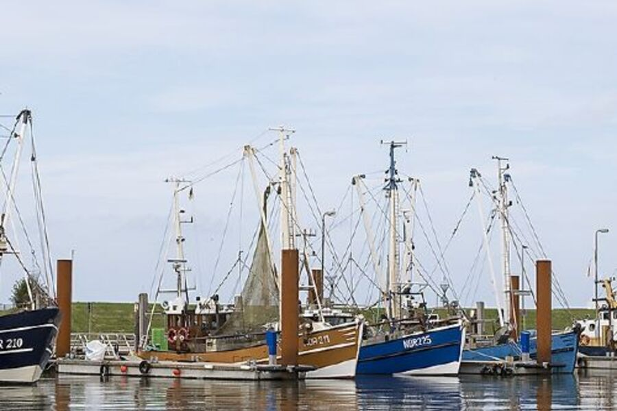 Krabbenkutter im Hafen von NORDDEICH