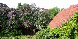 Ferienwohnung 'Am Fliederbusch' in Lübbenau - kleines Detailbild