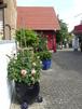 Ferienwohnung Rosengarten, Ferienwohnung in dr Näh