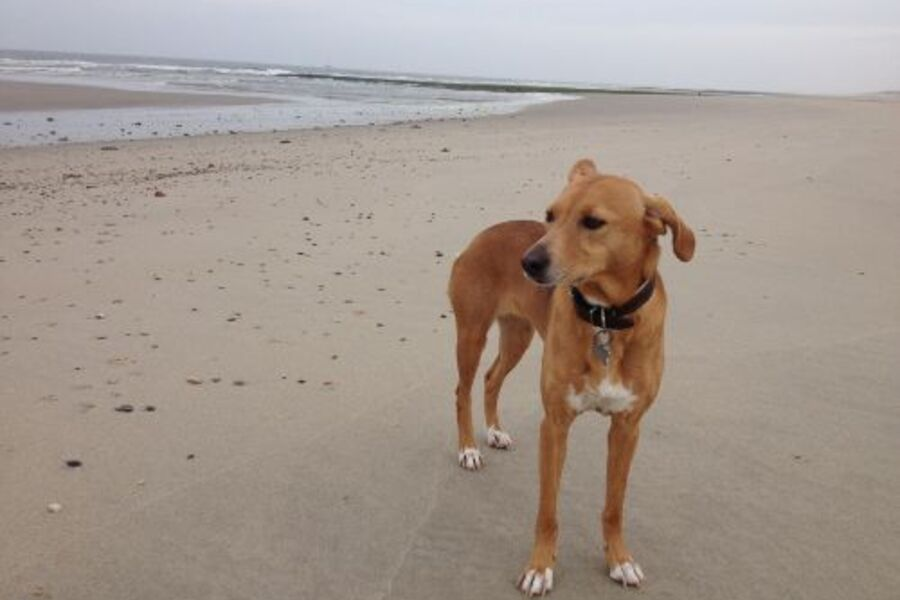 Fanny unsere Hund aufgewachsen am Strand