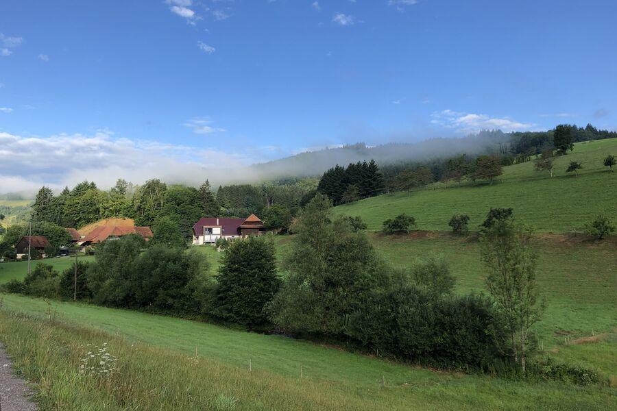 """beim """"Kühe füttern"""""""