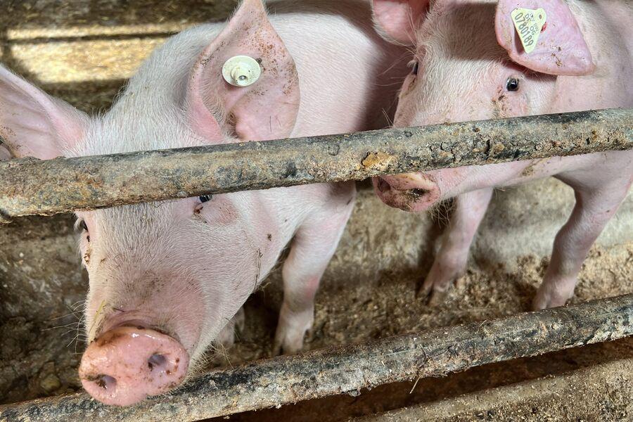 Blick auf unseren Bauernhof