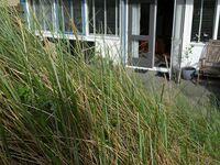 Huisje Strand - Beach Appartement 46 in Callantsoog - kleines Detailbild