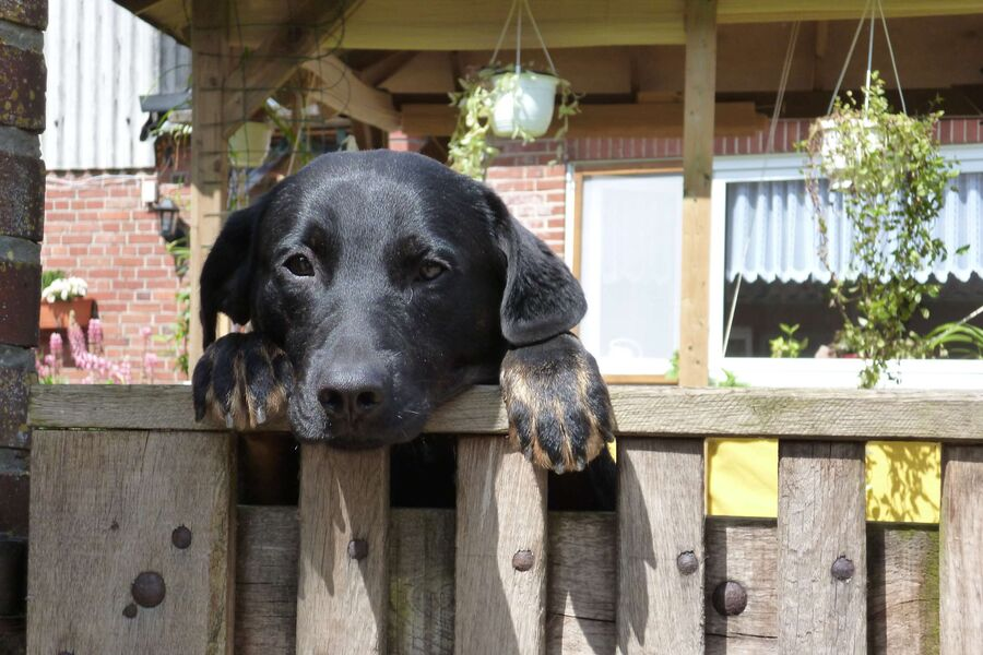 Brave Hunde wilkommen :-)