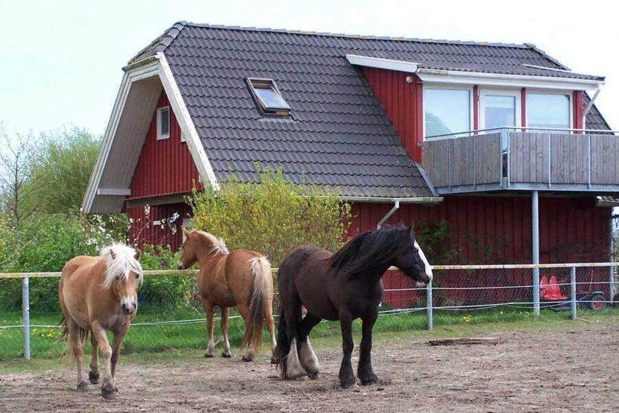 Urlaub auf dem Bauernhof, Ferienwohnung