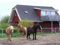 Urlaub auf dem Bauernhof, Ferienwohnung in Kenz-Küstrow OT Rubitz - kleines Detailbild