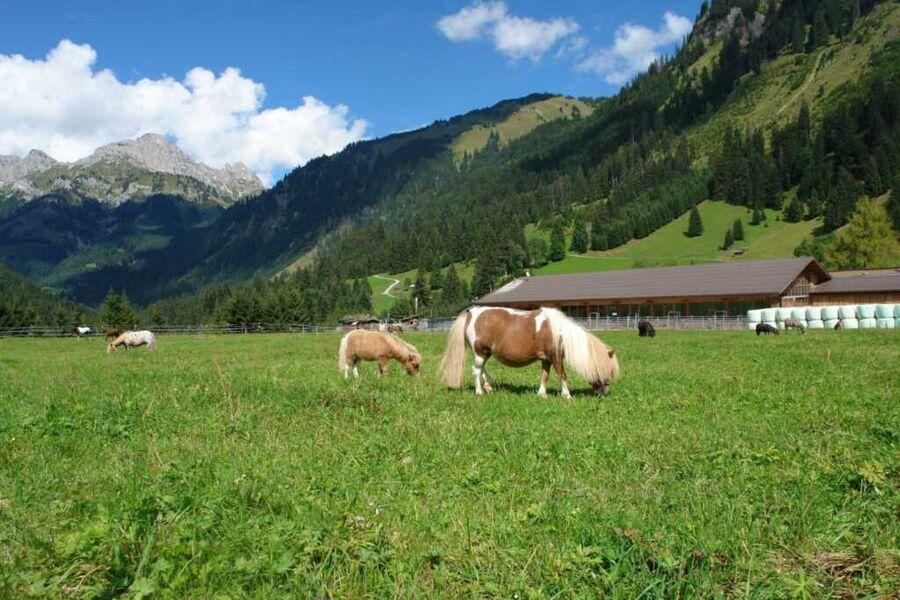 Berggut Gaicht, Ferienwohnung gelb 2-6 Pers