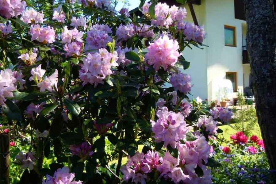 Appartements Vilsalp Rhododendronblüte