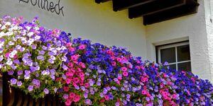 Haus Sonneck, Ferienwohnung Typ C in Schluchsee - kleines Detailbild