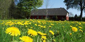 Ferien auf dem kleinen Bauernhof, Ferienwohnung OG in Ahrenshagen-Daskow OT Tribohm - kleines Detailbild
