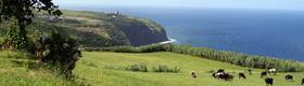 Ferienhaus auf den Azoren