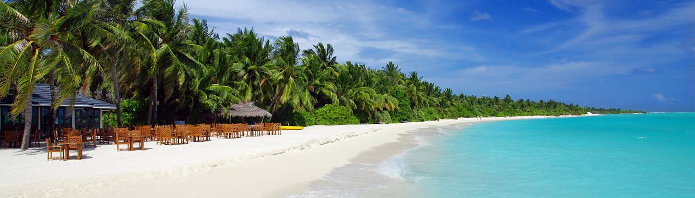 mittelamerika und karibik strand palmen