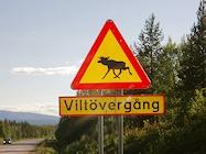 vaermland schweden elche