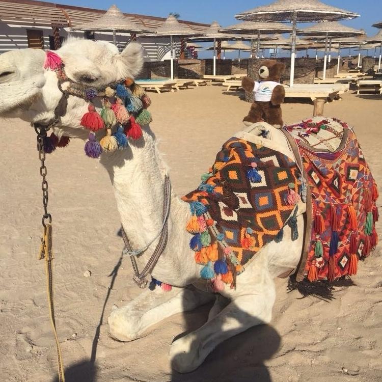 Den deutschen Sommer im nordöstlichen Afrika verlängern